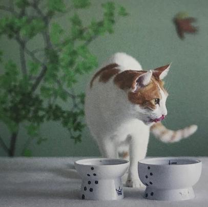 猫壱 脚付フードボウル カタログ画像③
