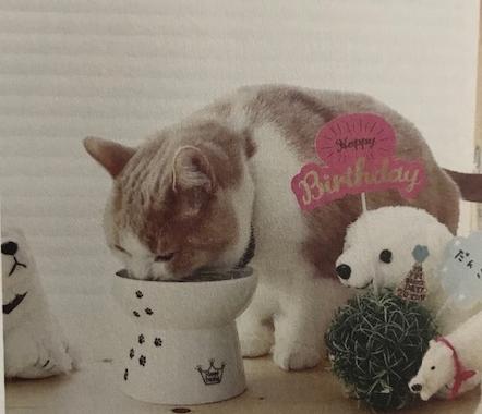 猫壱 脚付フードボウル カタログ画像④