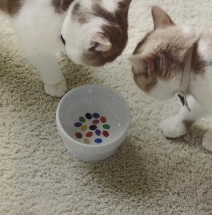 猫壱 脚付 ウォーターボール キャンディ d