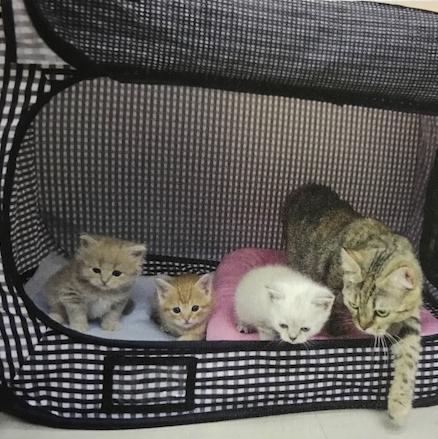 猫壱 ポータブルケージ 仔猫