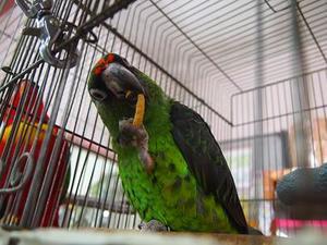 ポリッツ食べる鳥